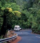 Driving through Waipoua forest