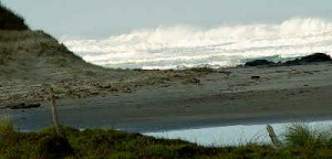Sometimes wild, sometimes calm - whatever the weather have a great time on the beach in Mitimiti, Hokianga